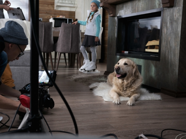 Оператор снимает собаку